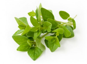 fresh herbs 300x223 Herbal extract products Tentorium