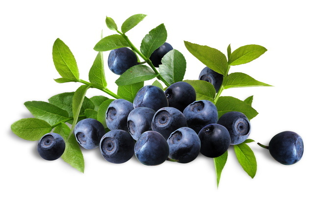 Bilberry supplement on perga from Tentorium
